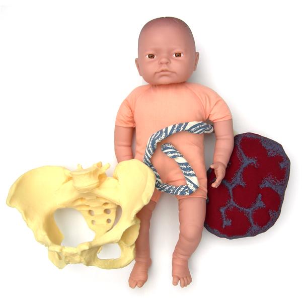 Pelvis and Pink fetal Doll with pelvis