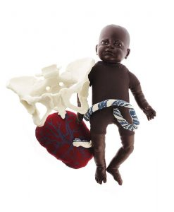 Fetal Doll Brown with Placenta and Female Pelvis Model